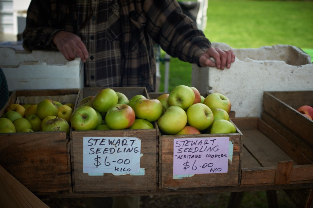 Stewart seedling apples